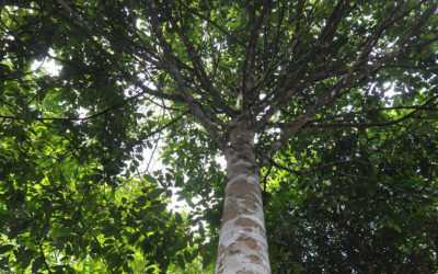 EDC to conserve most rare, threatened BINHI native tree species with ERDB-DENR